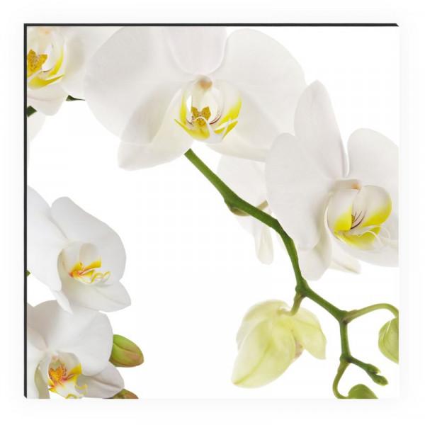 Kitchen Panel Orchidee Weiß