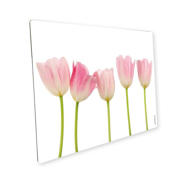 Pop Tulpen 1