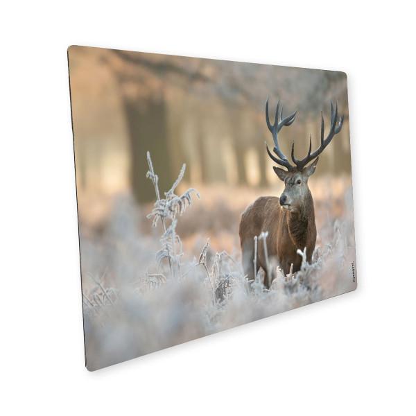 Pop Winter Deer 1